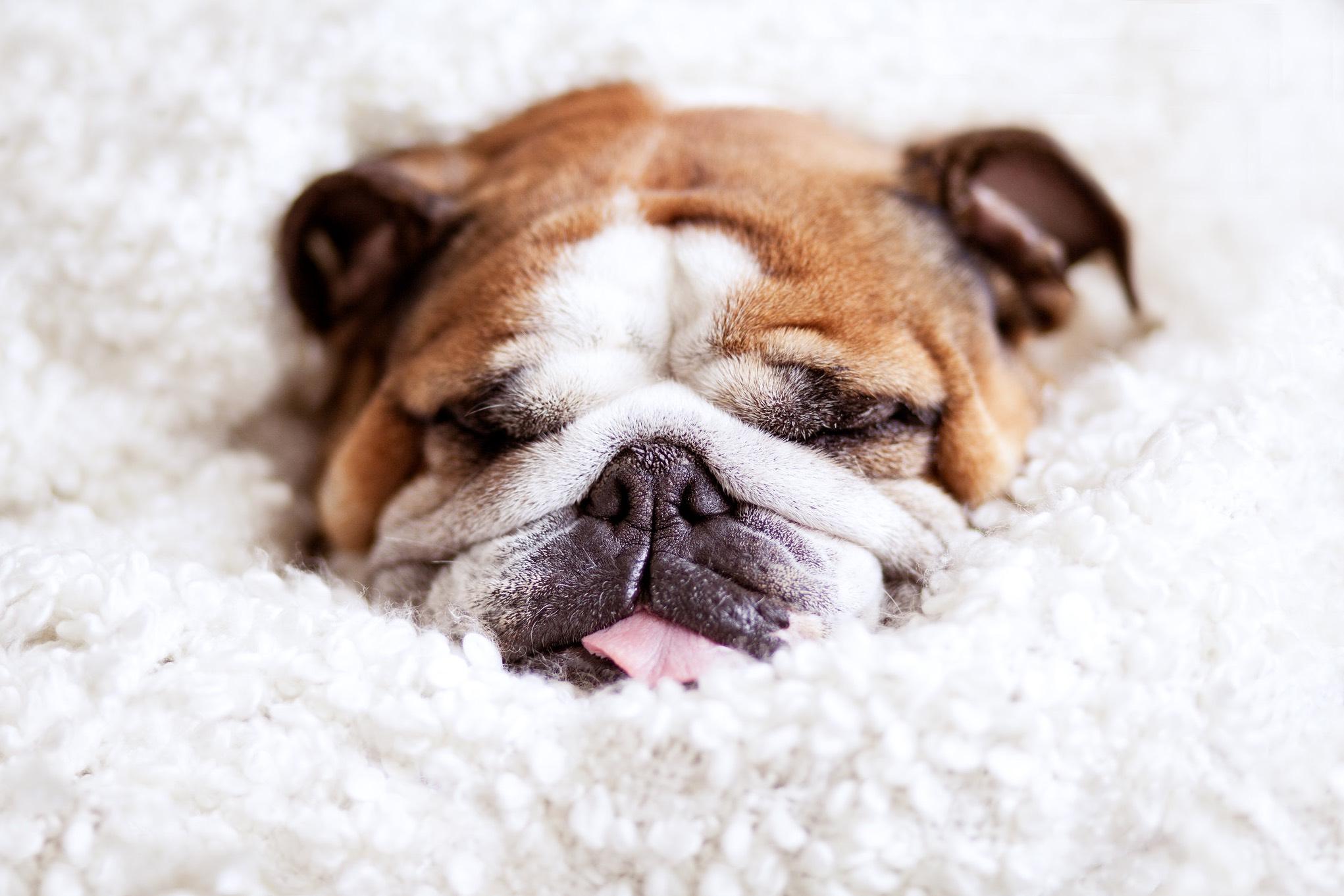 Fotografie-boeken-honden-als-onderwerp
