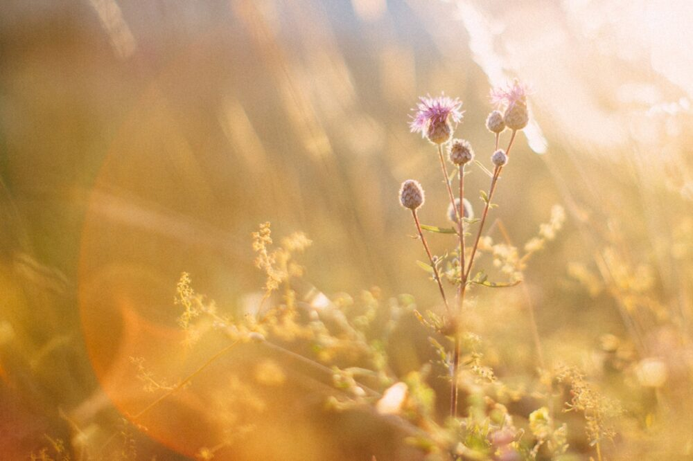 wat-te-doen-met-gedroogde-bloemen